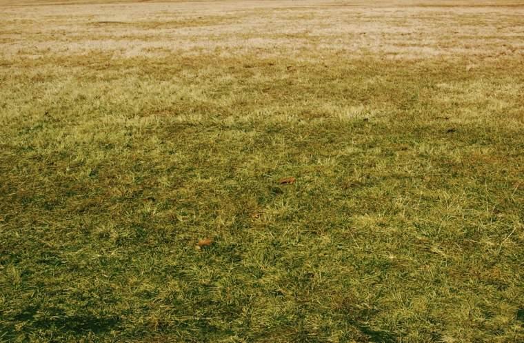 garden design-yellow-grass-problems