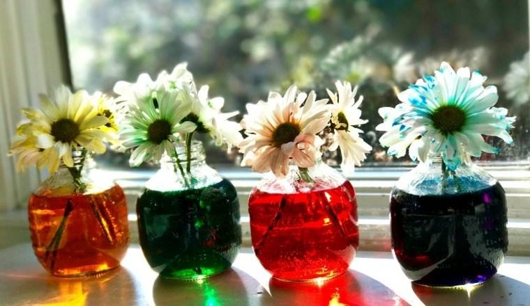 experimento-cientifico-con-flores
