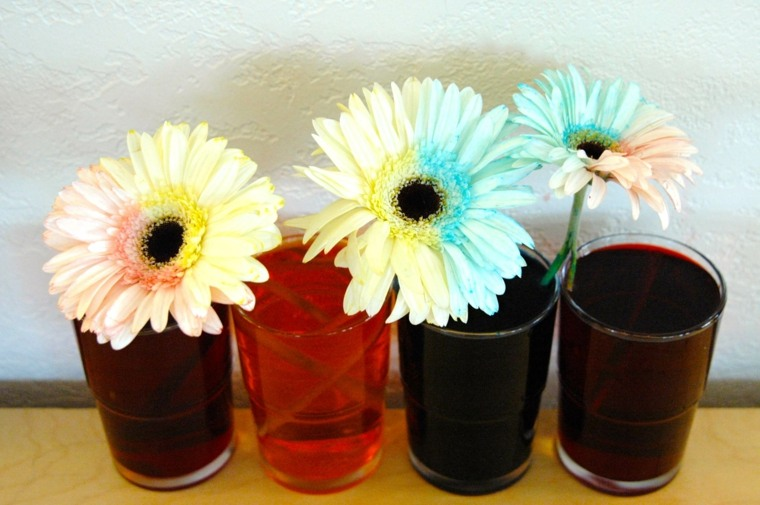 experimento-con-flores