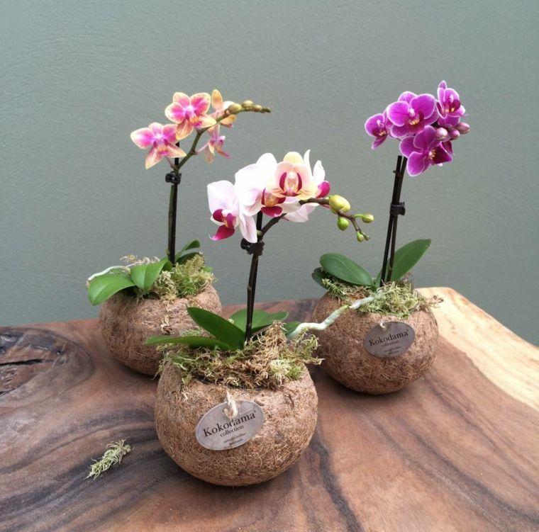 flor de orquidea-cuidados-caseros