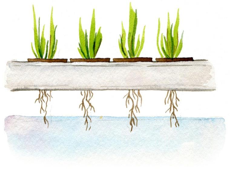 formas alternativas de cultivo-hidroponico-plantas