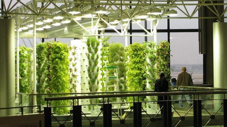 formas alternativas de cultivo-plantas-aeroponicas