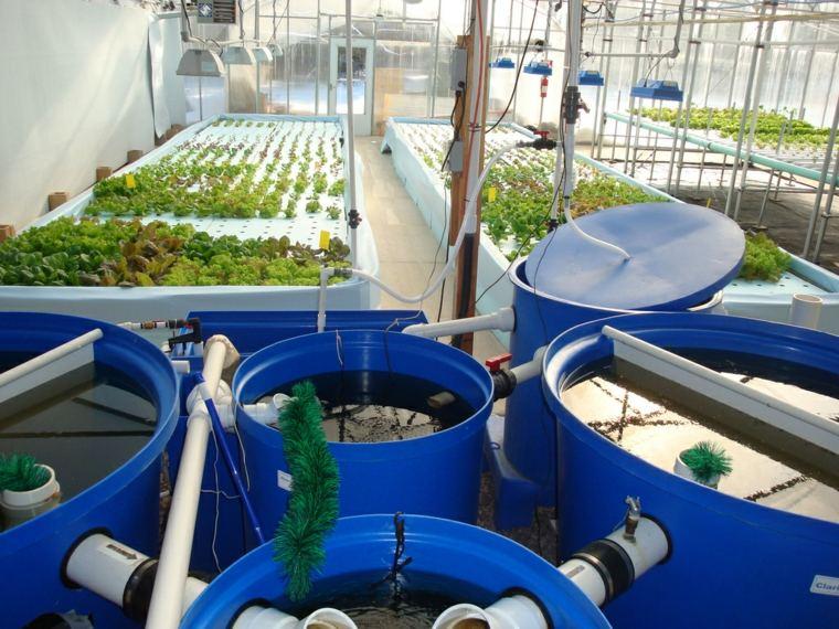formas de cultivo-acuaponia-basicas-caseras