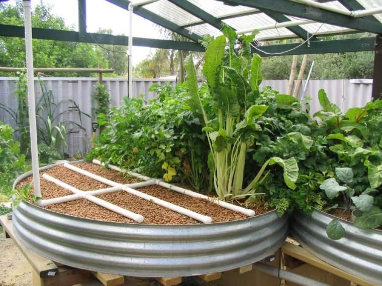 forma de cultivo-acuaponia-plantas-animales