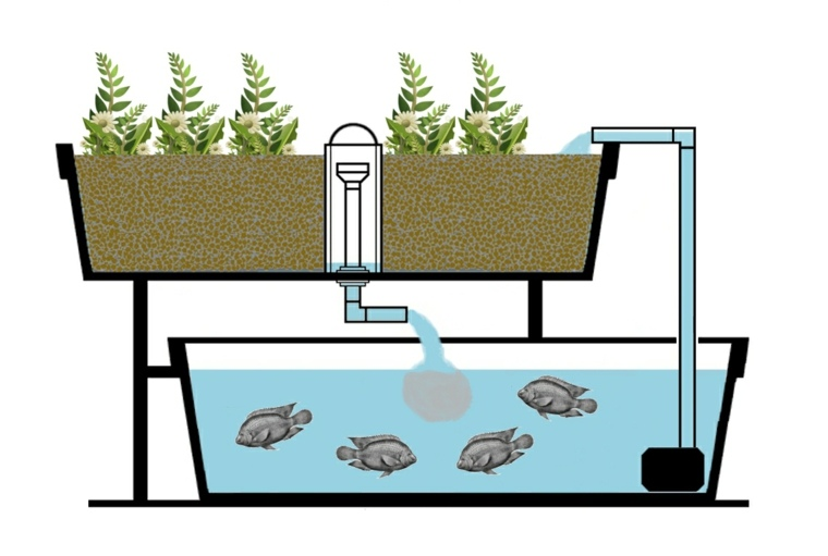 formas de cultivo-alternativo-acuaponicas
