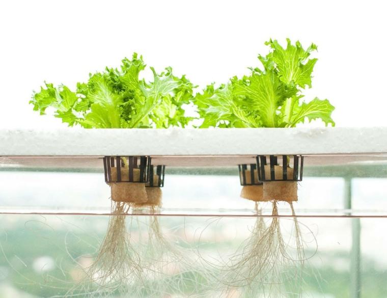 formas de cultivo-hidroponicas-plantas