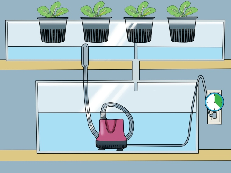 formas de cultivo-hidroponico-casero-plantas