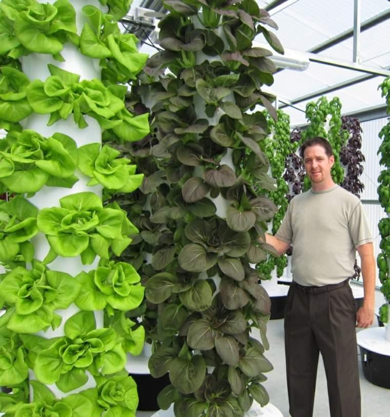 herramientas y tecnicas de cultivo-aeroponicas-plantas