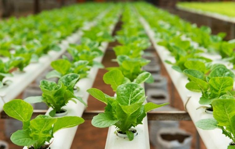 herramientas y tecnicas de cultivo-hidroponicas-plantas