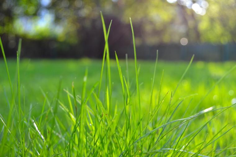 hierba comun-cesped-clima-calido