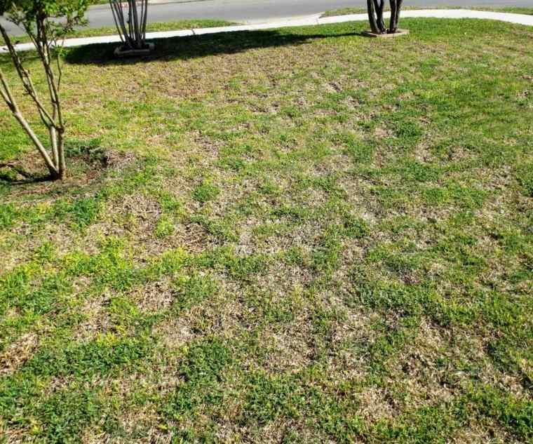 hierba comun-calvas-abundantes-cesped