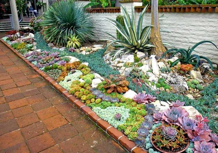 jardin-plantas-suculentas-ideas
