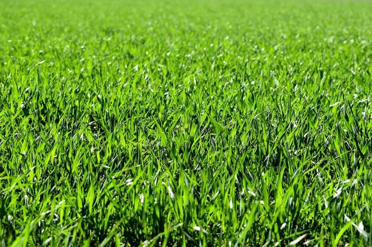 small-decorated-gardens-grass-warm-climate