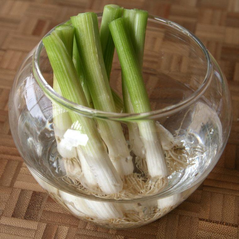 lista de verduras-cebolla-plantar-casa