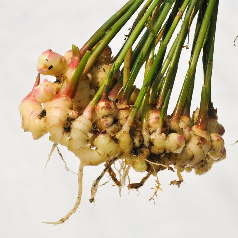 lista de verduras-jenjibre-casero