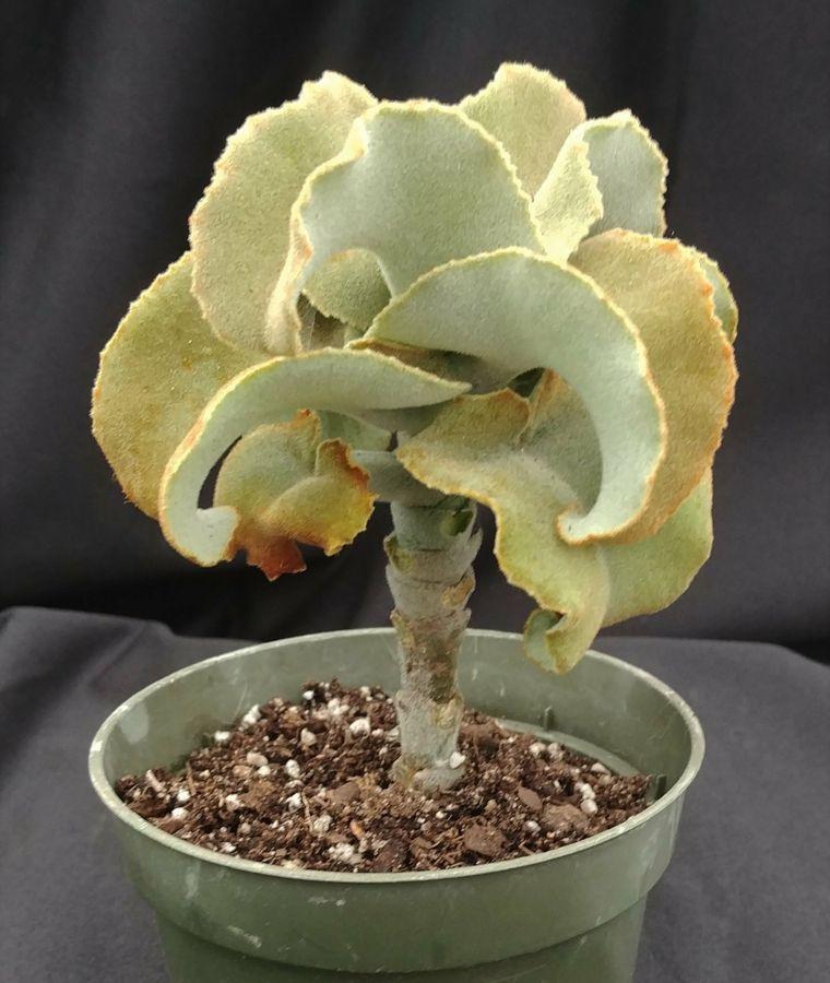 macetas-plantas-suculentas-estilo