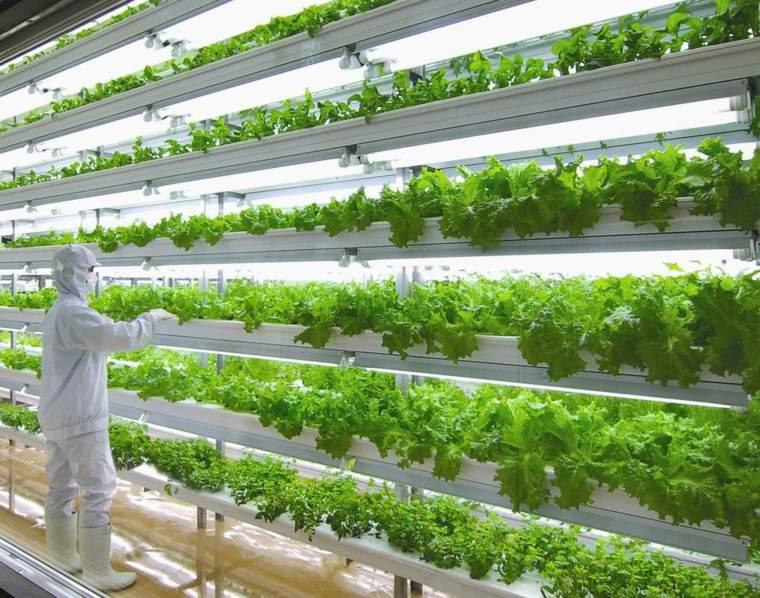metodos de cultivo agricola-aeroponicos
