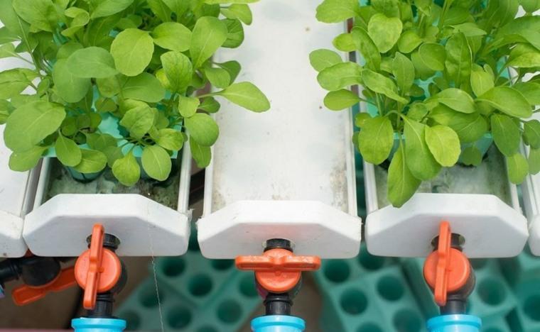 metodos de cultivo agricola-hidroponico-plantas