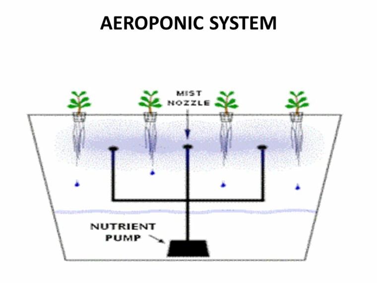 metodos de cultivo de plantas-aeroponicas