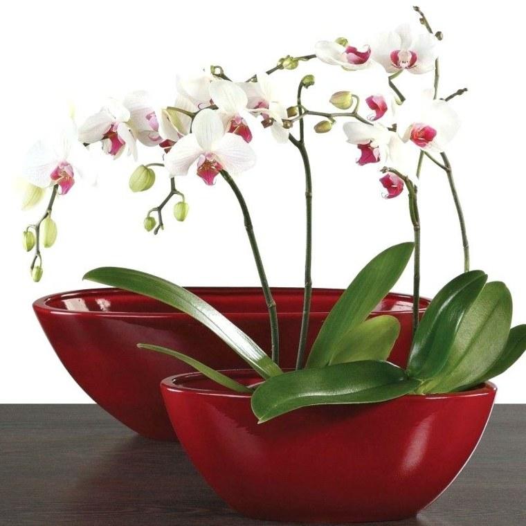 orquideas blancas-cuidados-caseros