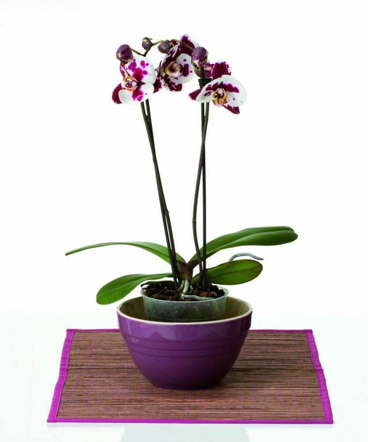 orquideas blancas-moradas-cuidados-casa