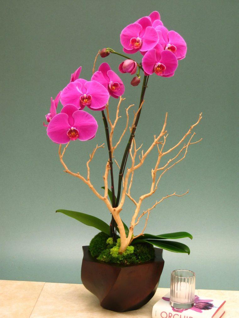 orquideas moradas-blancas-cuidados-casa