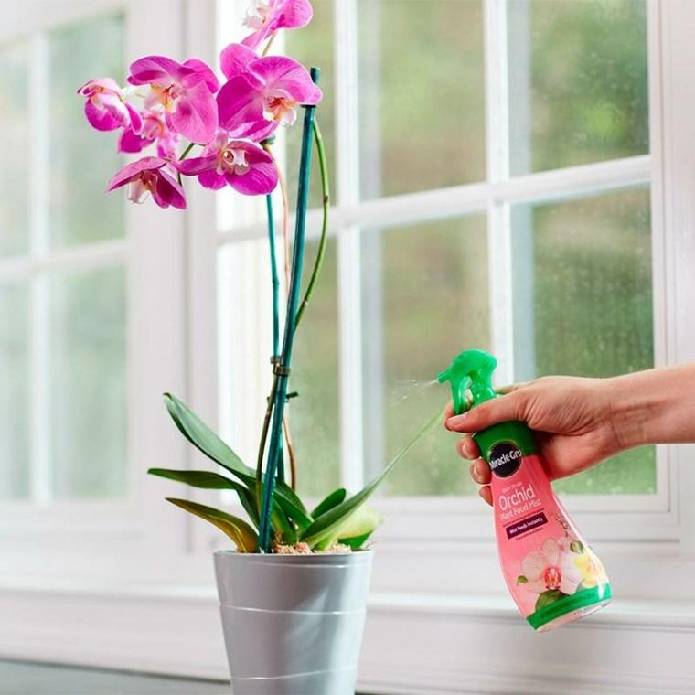 orquideas moradas-cuidados-caseros