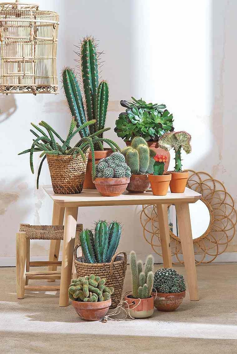 plantas-casa-cacrus-suculentas-opciones