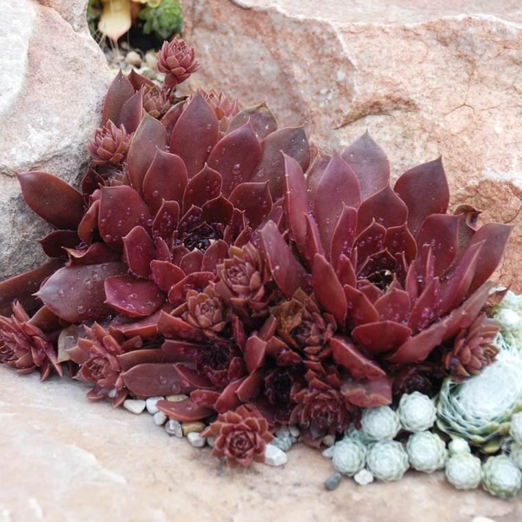plantas-colores-bellos-macetas-opciones