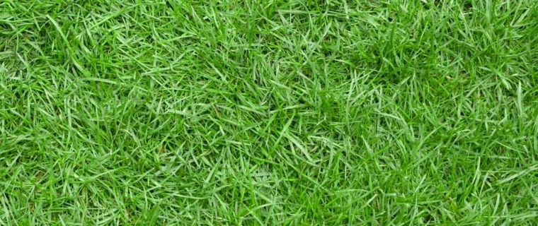 plants for garden-grass-cold-climate
