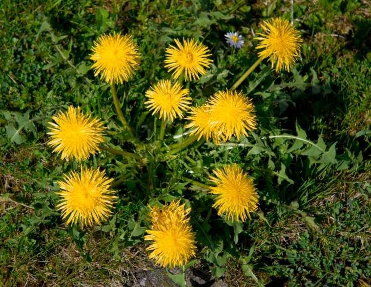 plantas para jardin-problemas-malas-hierbas