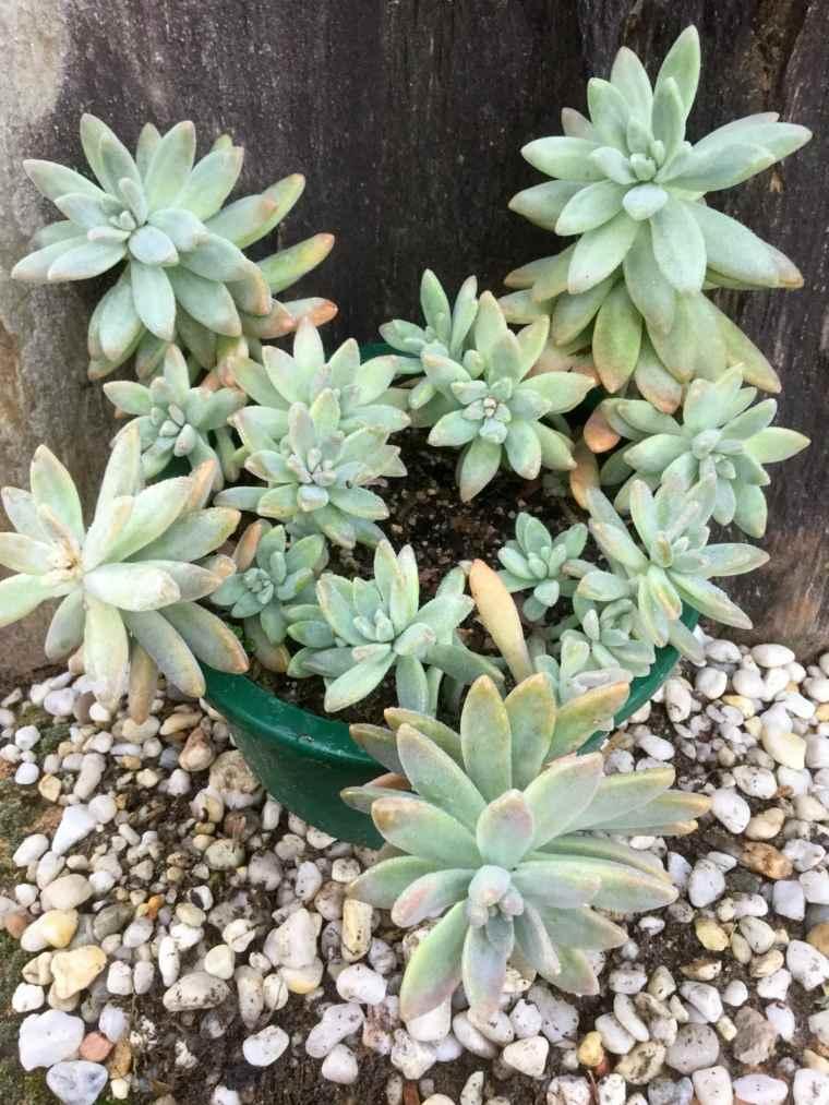 plantas-suculentas-caracteristicas-consejos-diferentes-tipos