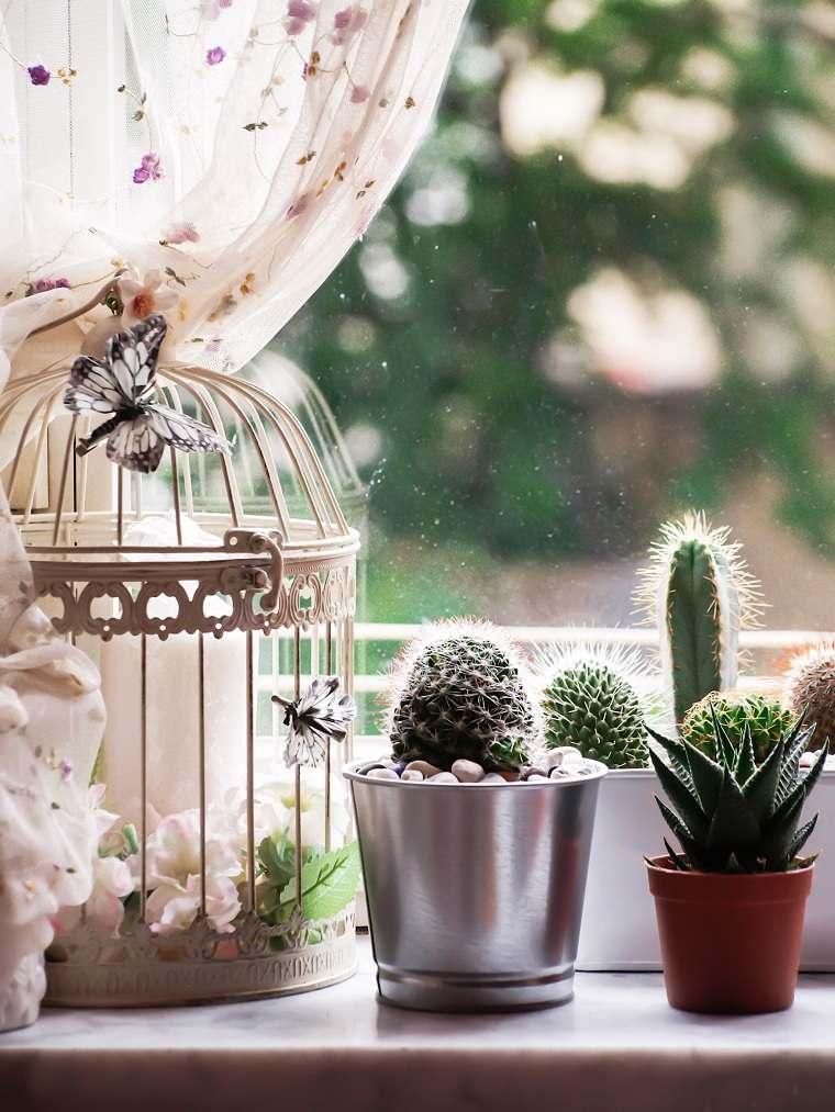 plantas suculentas-decorar-casa-opciones-ventana