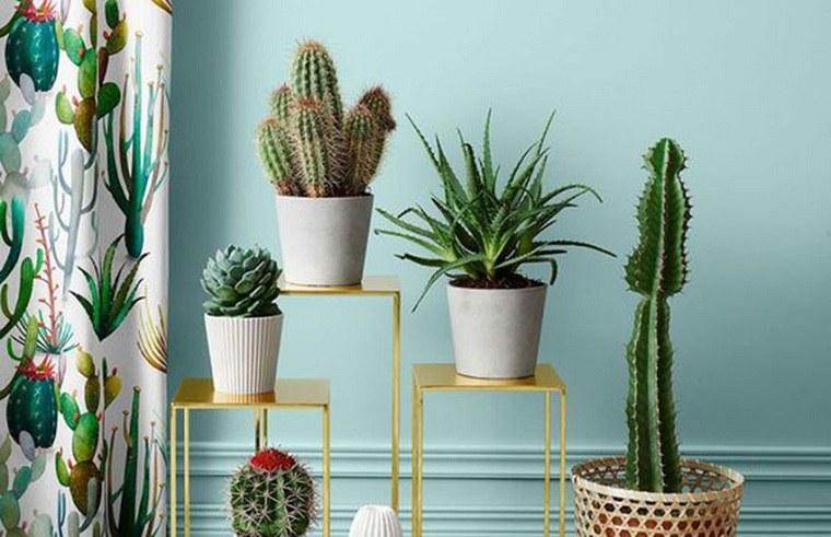 plantas suculentas-decorar-casa-opciones