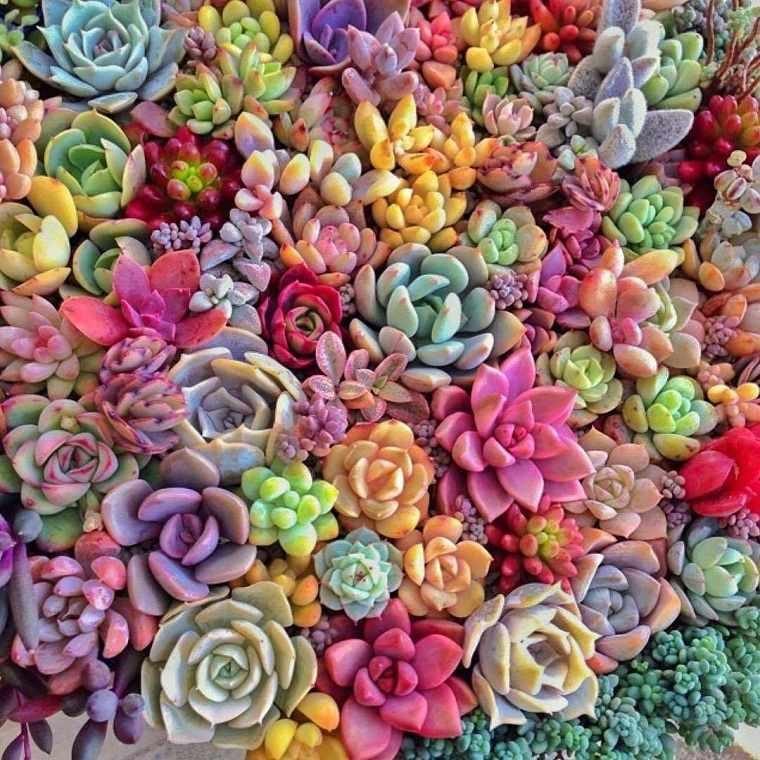 plantas suculentas-riego-consejos-belleza-jardin