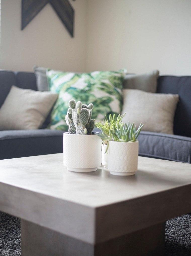 plantas suculentas-riego-consejos-decorar-salon
