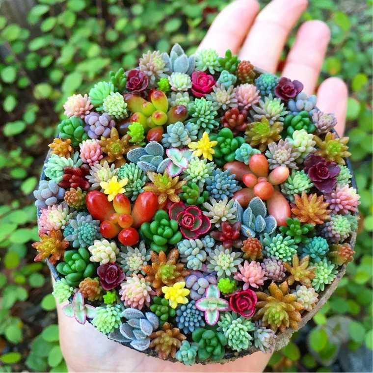 plantas-suculentas-riego-consejos-mini-jardin
