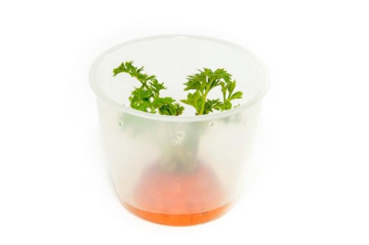 propiedades de la zanahoria-criada-casa