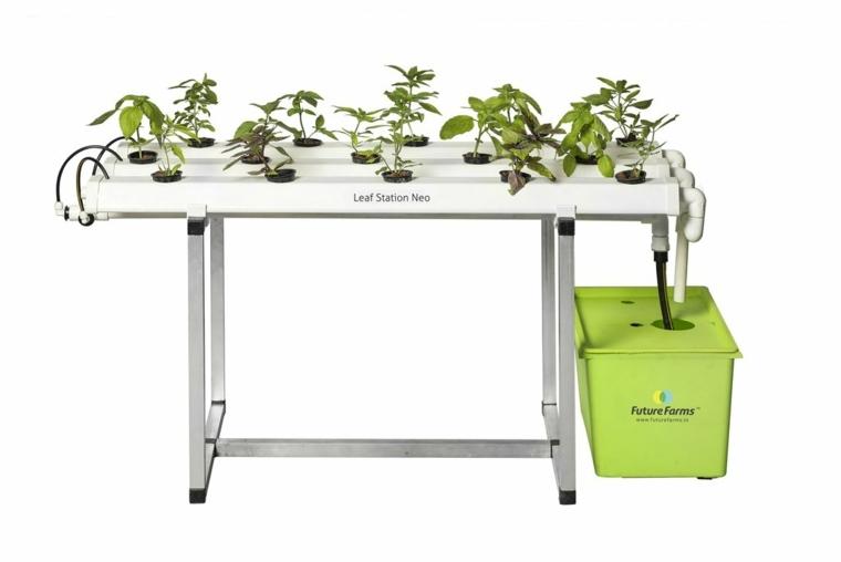 que es el cultivo hidroponico-plantas