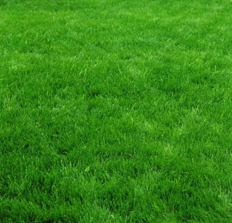 semillas de hierba-cesped-clima-calido