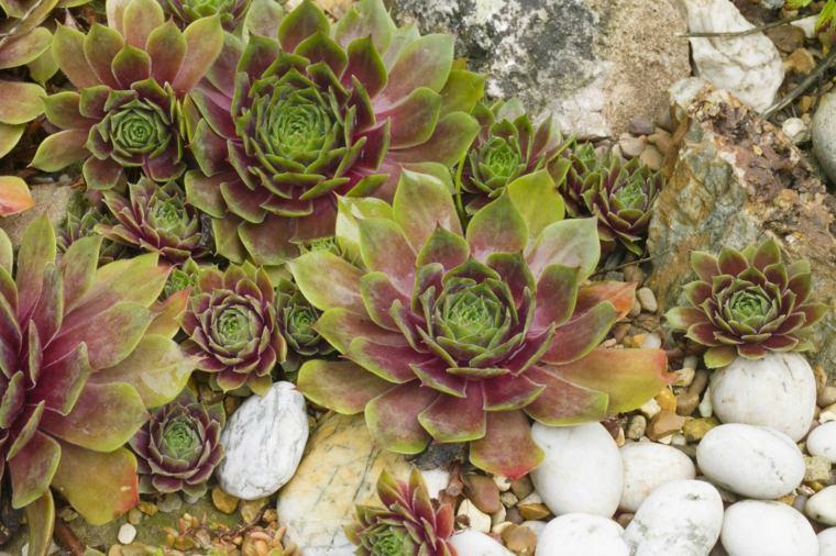 siemprevivas-suculentas-ideas-decorar-exterior-plantas