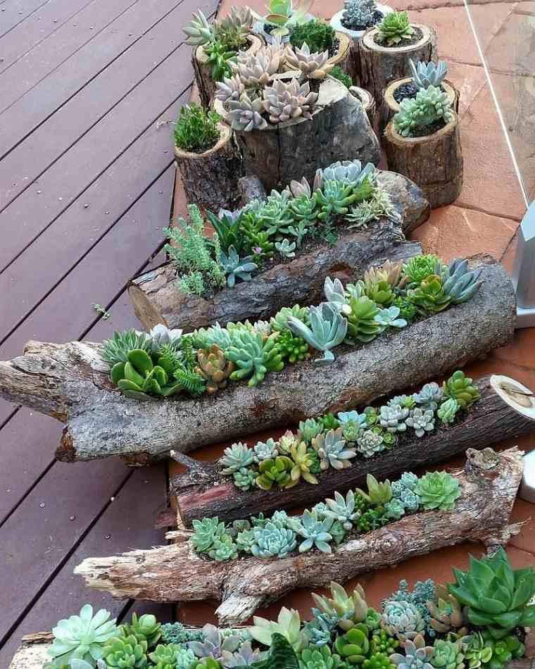 suculentas-troncos-madera-cuidado-opciones