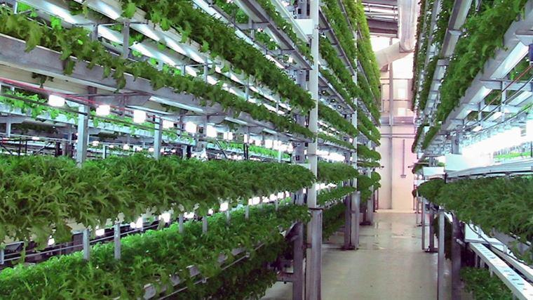 tecnicas de cultivo-aeroponico-plantas