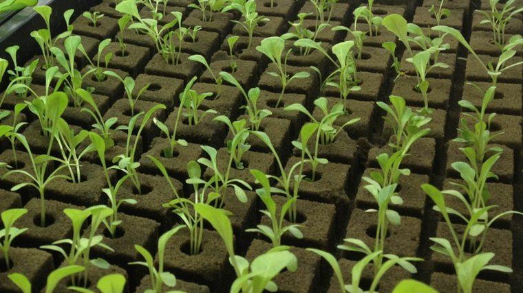 tipos de hidroponia-cultivas-plantas