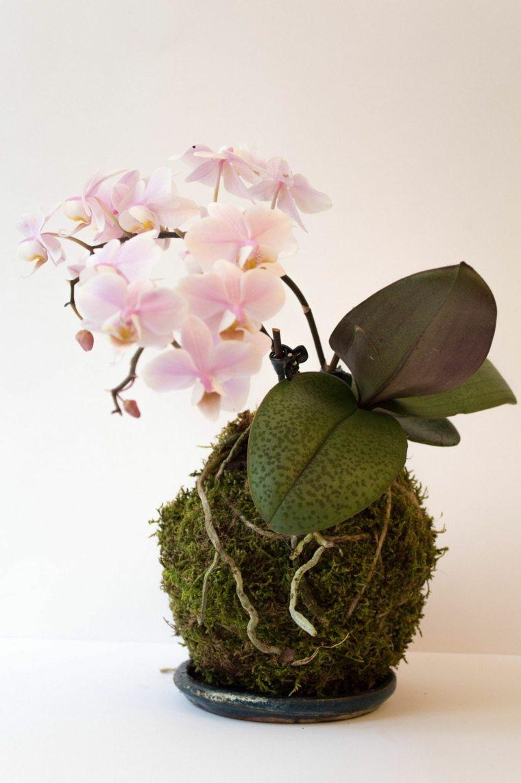tipos de orquideas-cuidados-caseros
