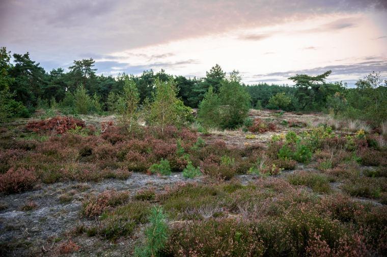 paisaje-en-la-naturaleza