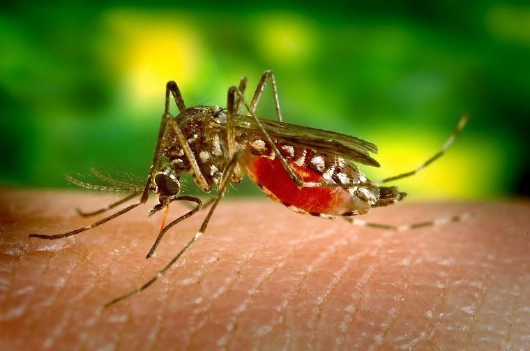 repelente de mosquitos-natural-casero-ideas