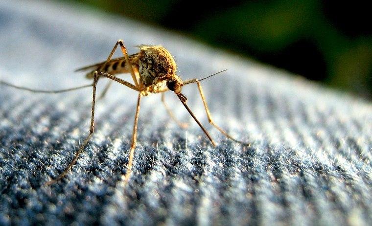 repelente de mosquitos-natural-casero-opciones-originales