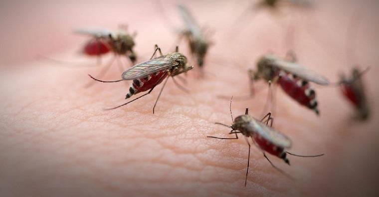 repelente de mosquitos-natural-enfermedades-ideas