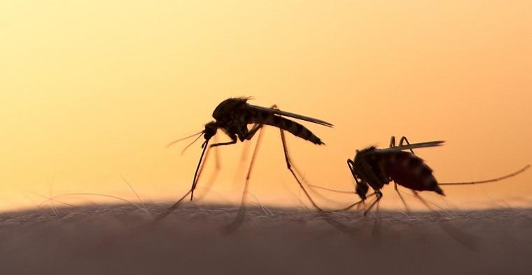 repelente de mosquitos-natural-enfermedades